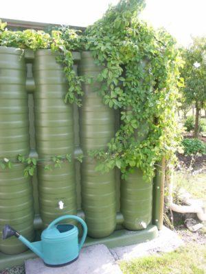Cuve d'eau végétalisée